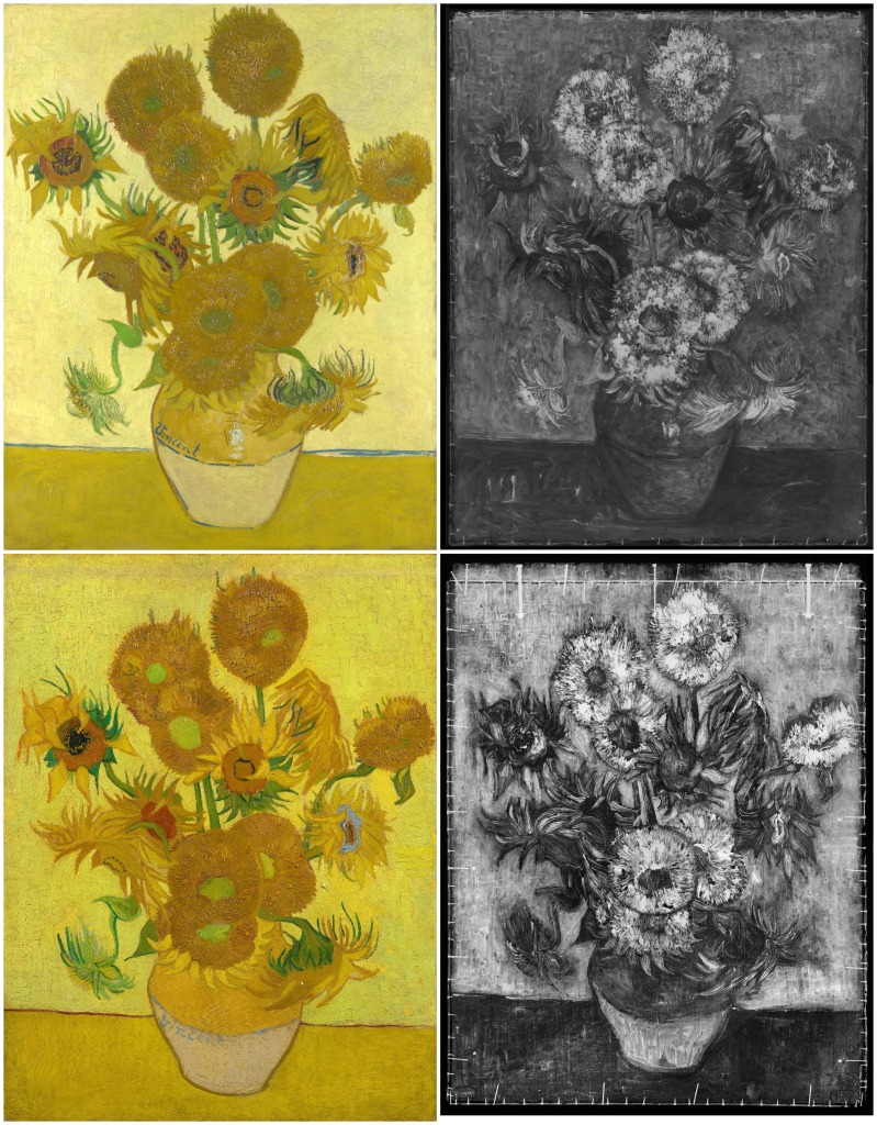 Both 15 sunflowers with corresponding x rays