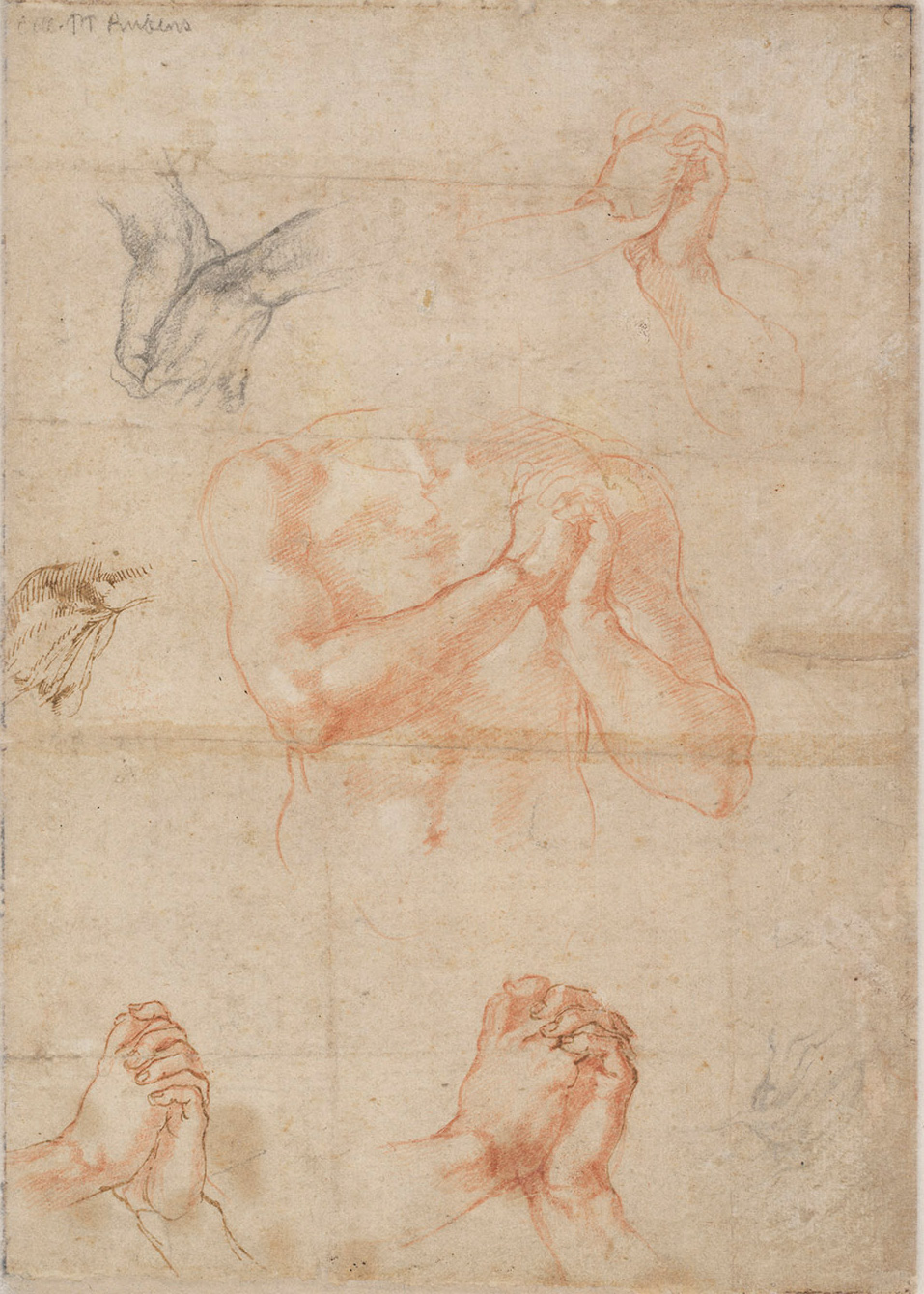 michelangelo-sebastiano-x9021v