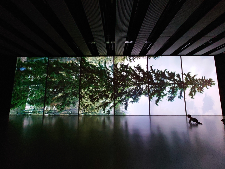Review: Among the Trees – Hayward Gallery